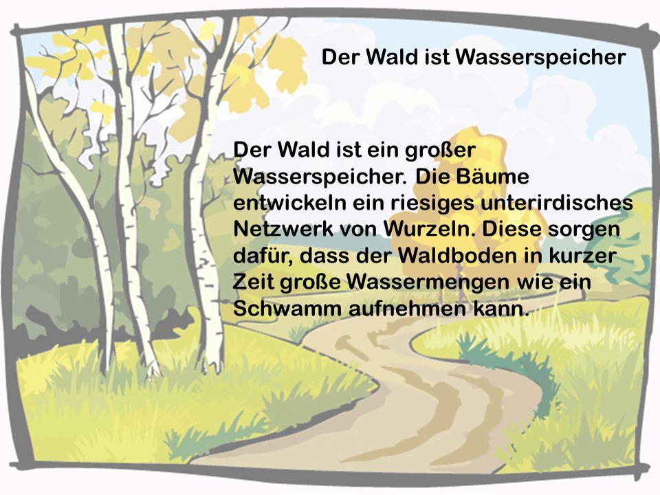 Der Wald ist Wasserspeicher