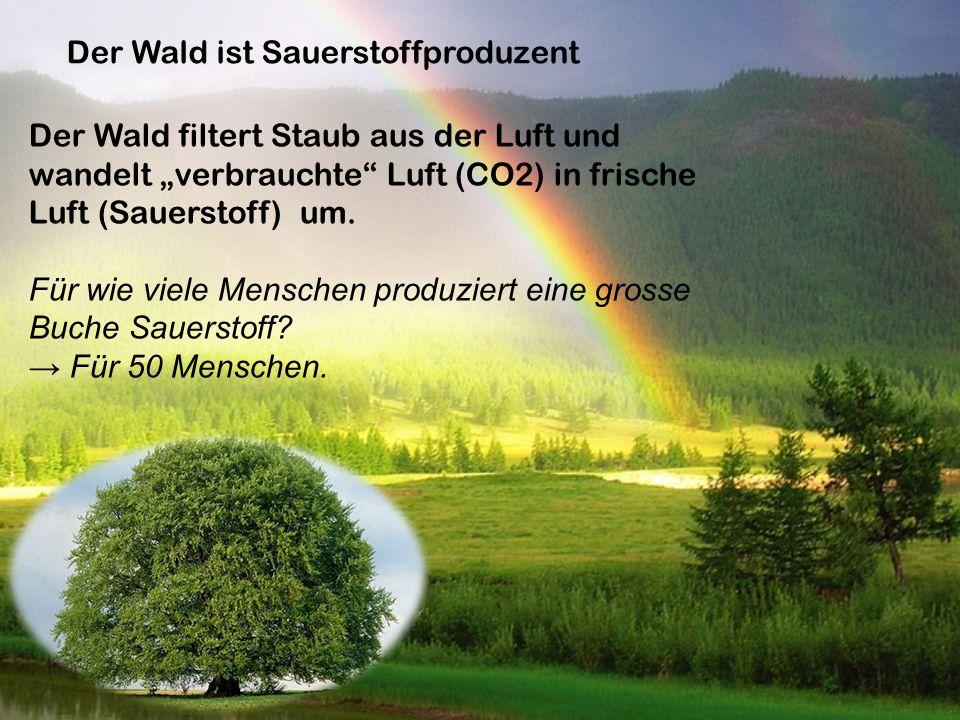 Der Wald ist Sauerstoffproduzent