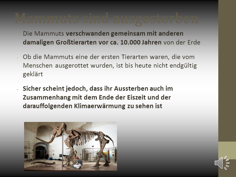 Mammuts sind ausgestorben