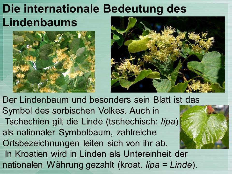 Die internationale Bedeutung des Lindenbaums