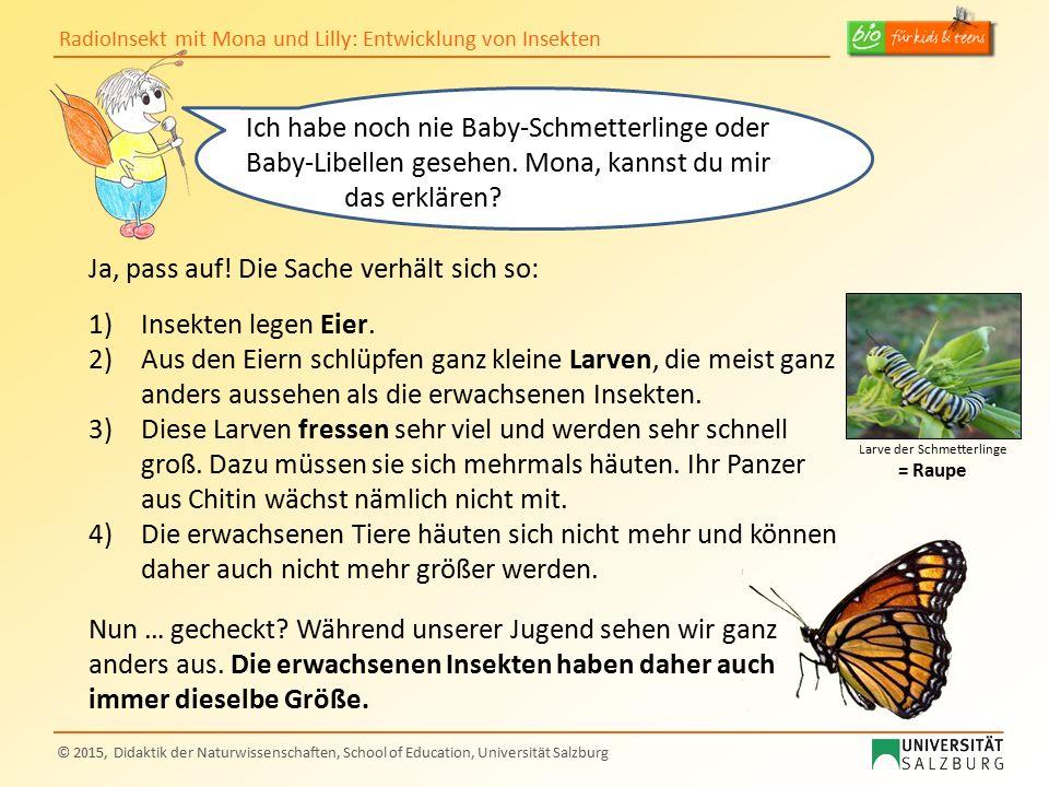 Larve der Schmetterlinge = Raupe