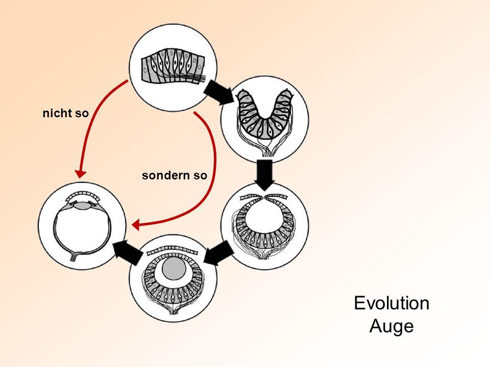 nicht so sondern so Evolution Auge