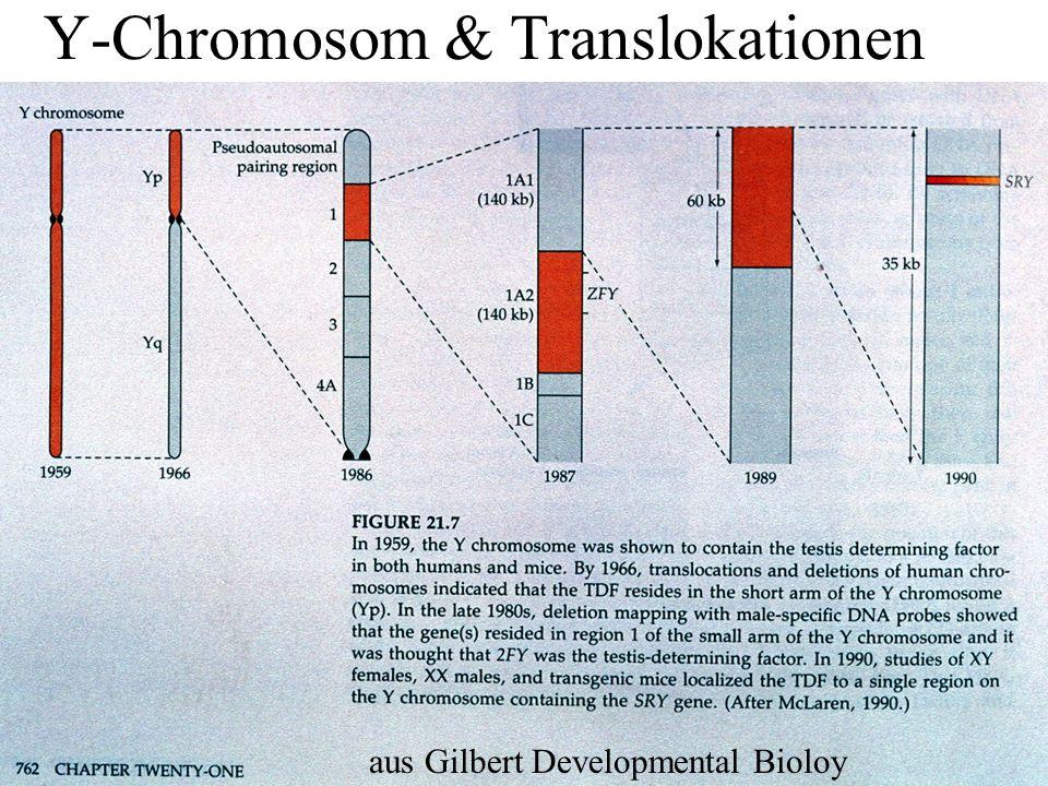 Y-Chromosom & Translokationen