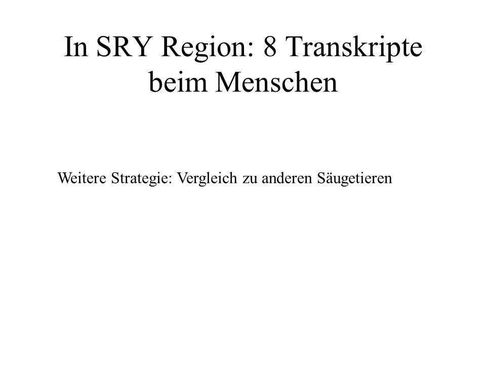 In SRY Region: 8 Transkripte beim Menschen