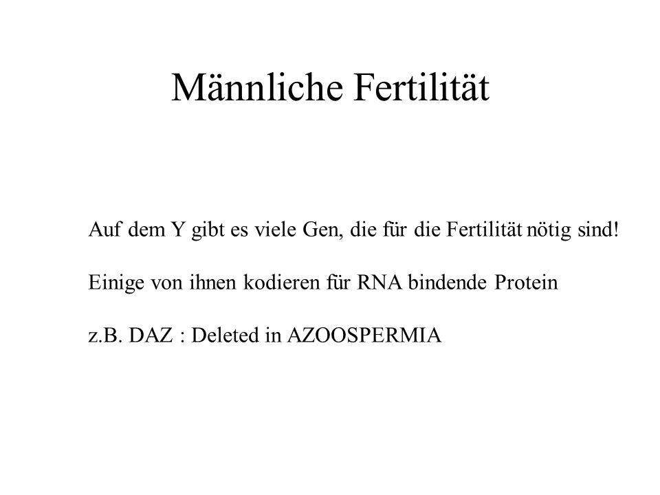 Männliche Fertilität Auf dem Y gibt es viele Gen, die für die Fertilität nötig sind! Einige von ihnen kodieren für RNA bindende Protein.