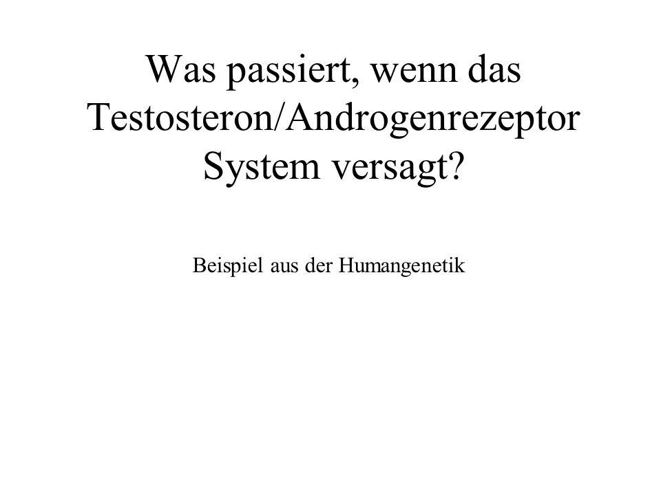 Was passiert, wenn das Testosteron/Androgenrezeptor System versagt