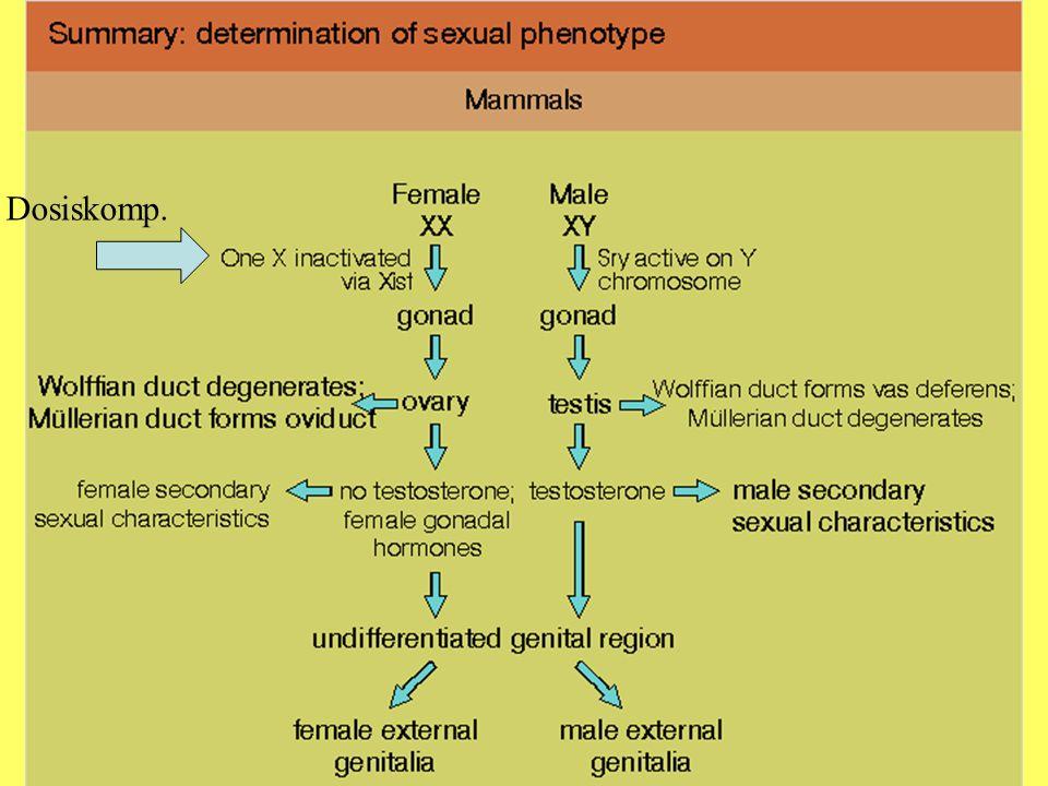Geschlechtsbestimmung