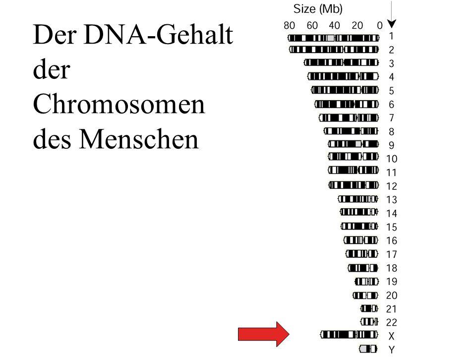 Der DNA-Gehalt der Chromosomen des Menschen