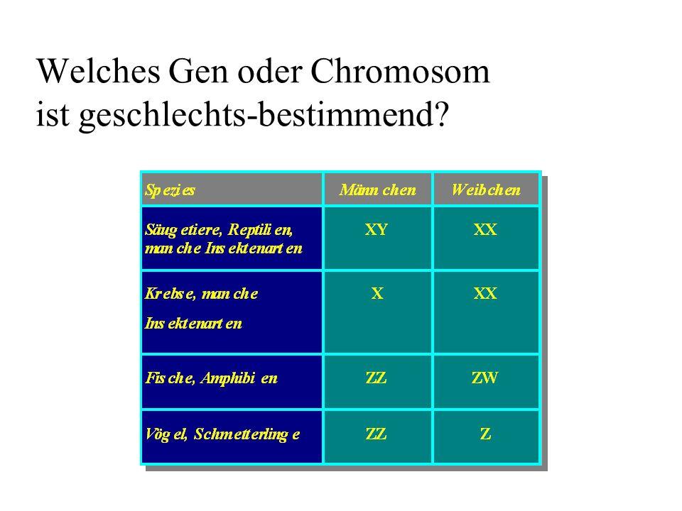 Welches Gen oder Chromosom ist geschlechts-bestimmend