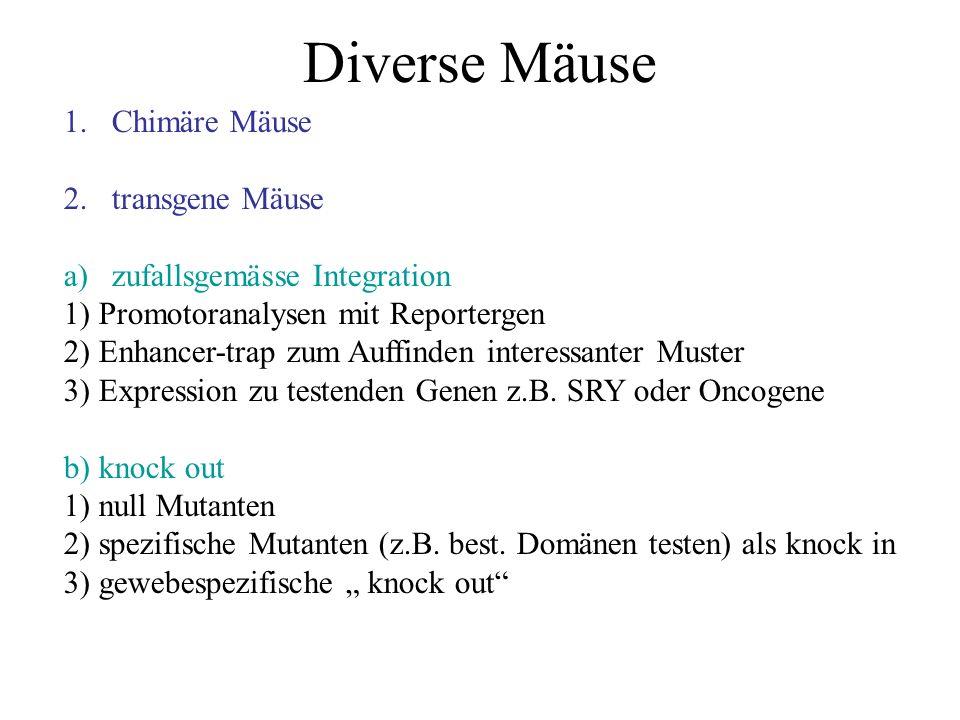 Diverse Mäuse Chimäre Mäuse transgene Mäuse zufallsgemässe Integration