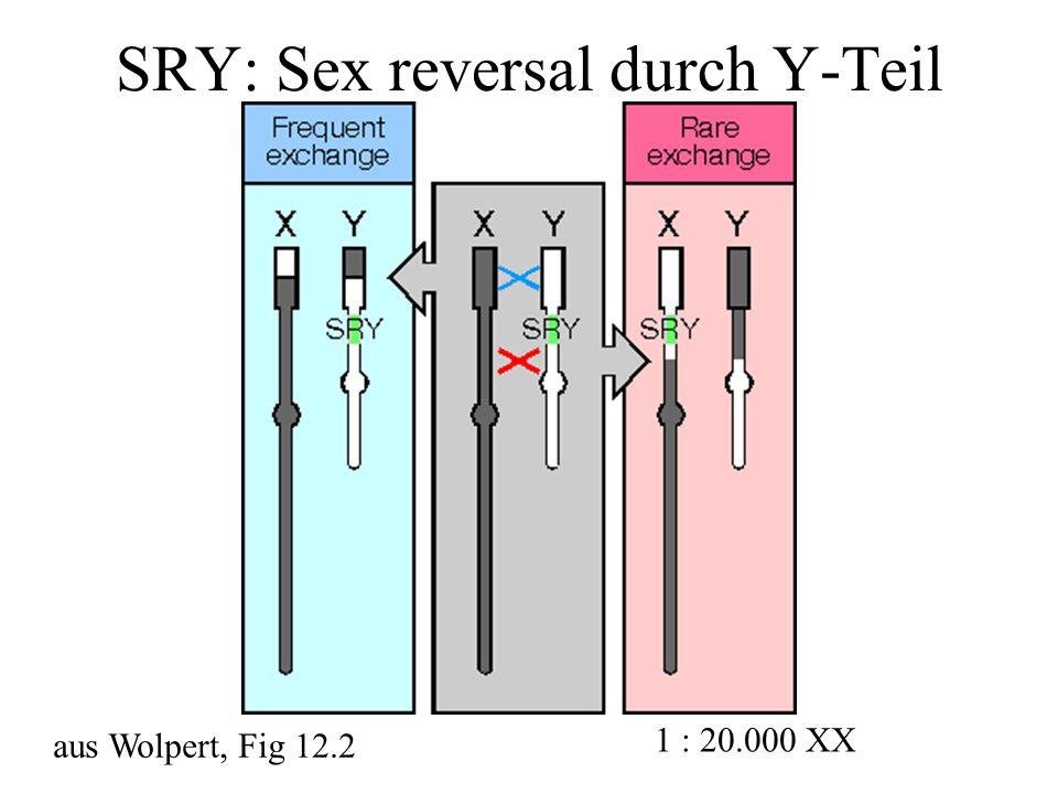 SRY: Sex reversal durch Y-Teil