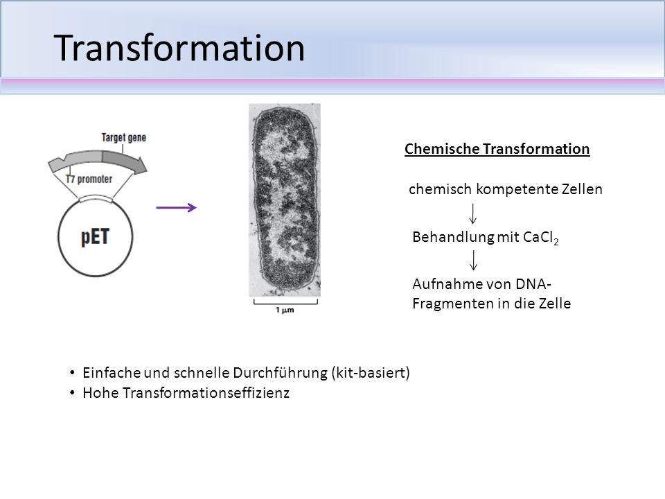 Transformation Chemische Transformation chemisch kompetente Zellen