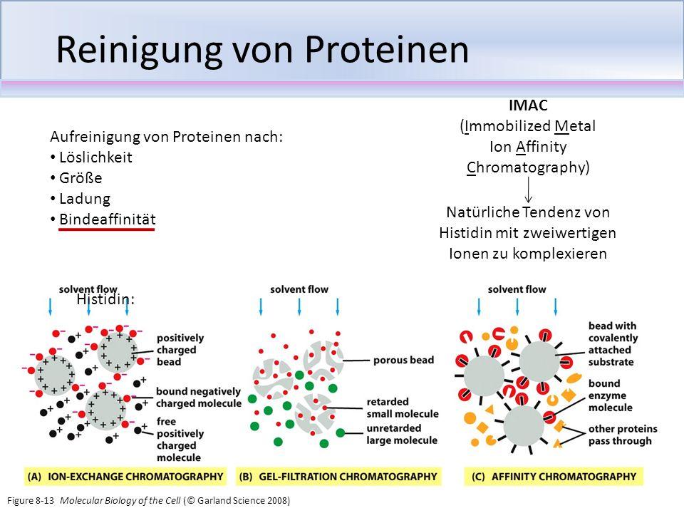 Reinigung von Proteinen