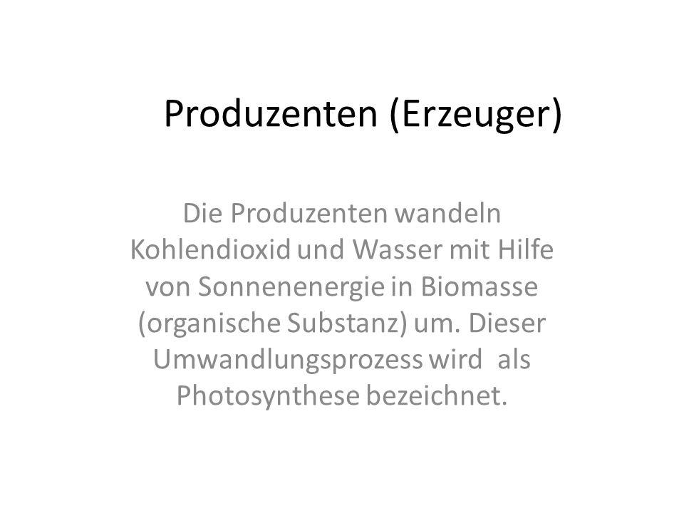 Produzenten (Erzeuger)