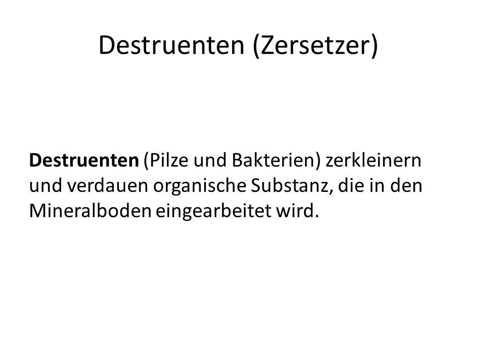 Destruenten (Zersetzer)