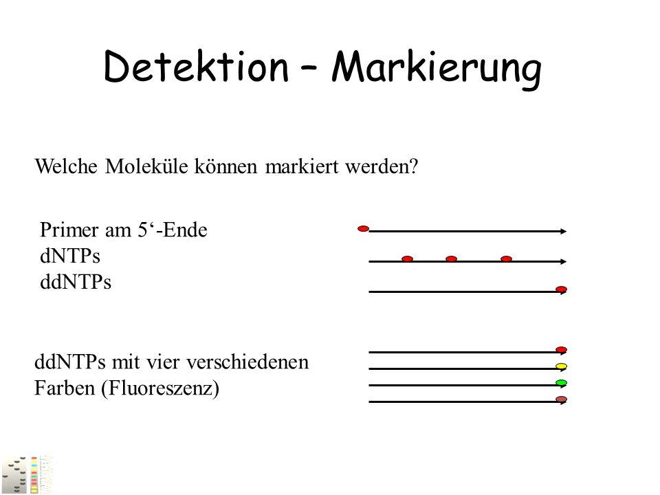 Detektion – Markierung