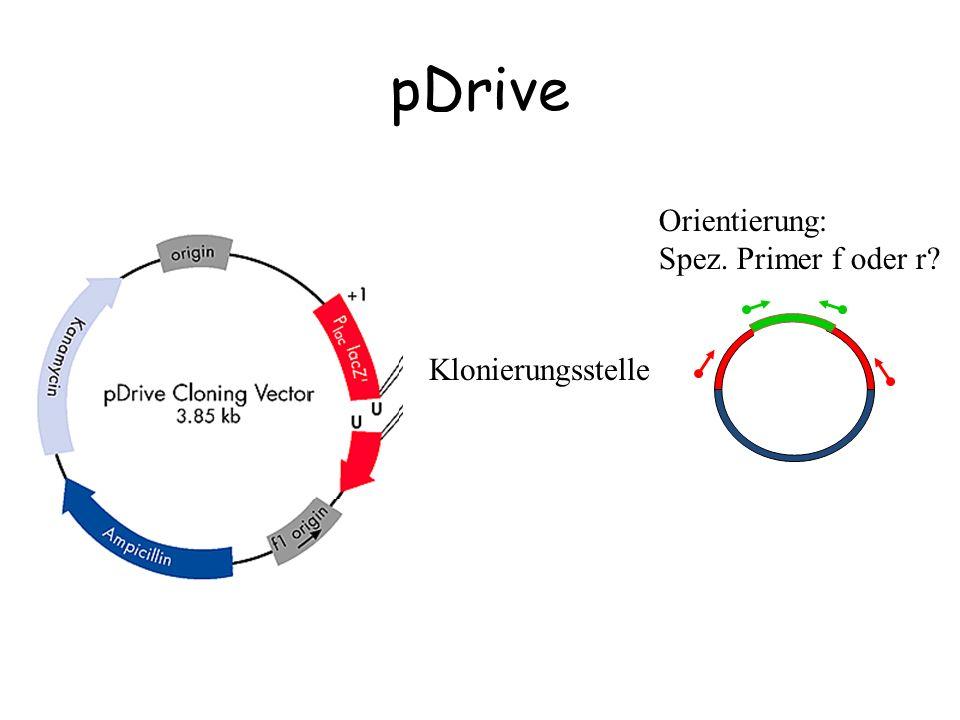 pDrive Klonierungsstelle Orientierung: Spez. Primer f oder r