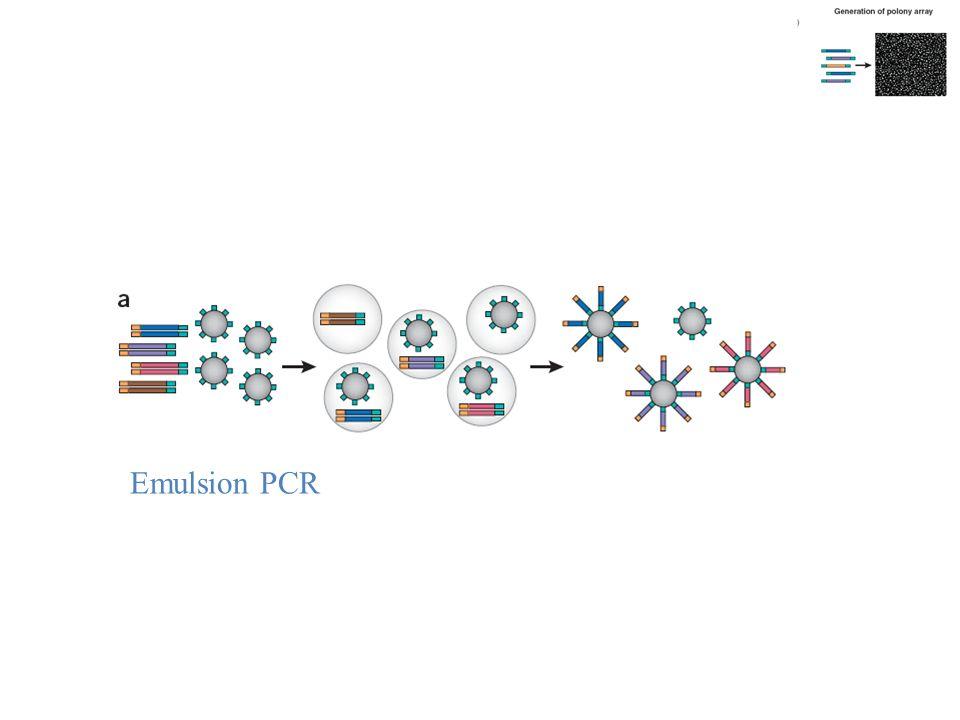 Emulsion PCR