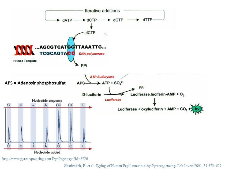 APS = Adenosinphosphosulfat