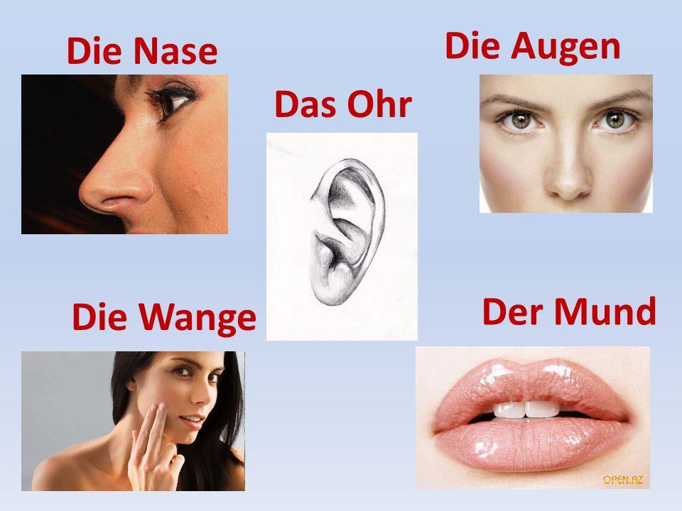 Die Augen Die Nase Das Ohr Der Mund Die Wange