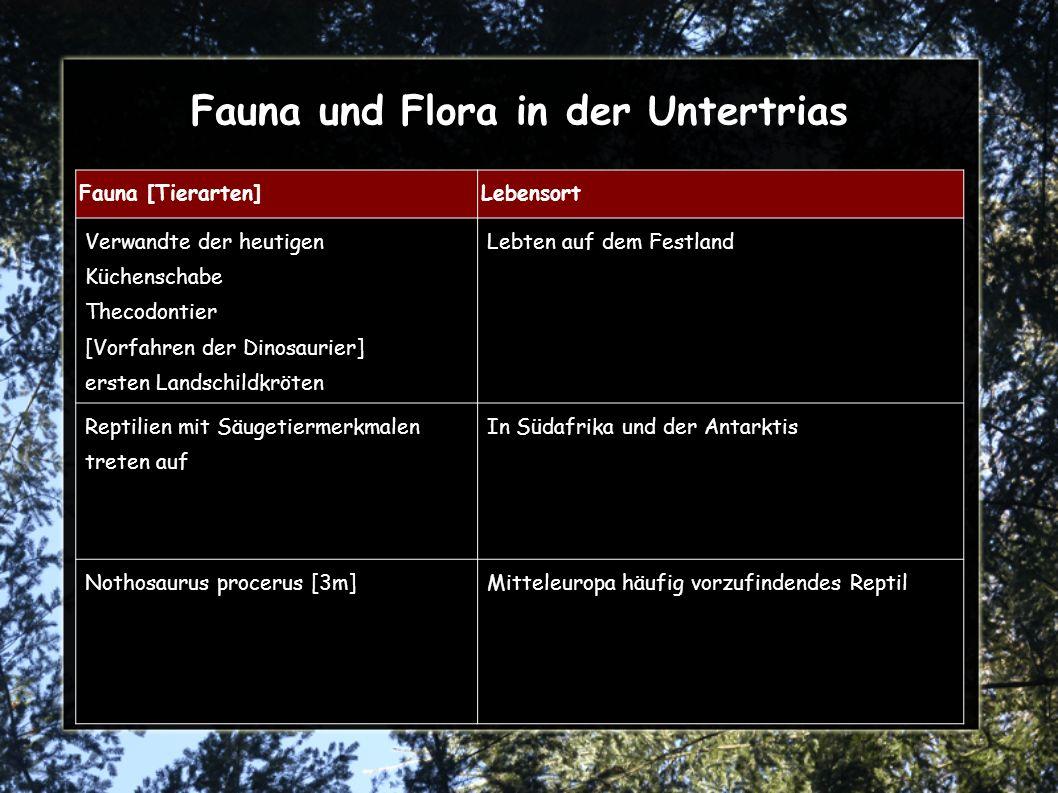 Fauna und Flora in der Untertrias