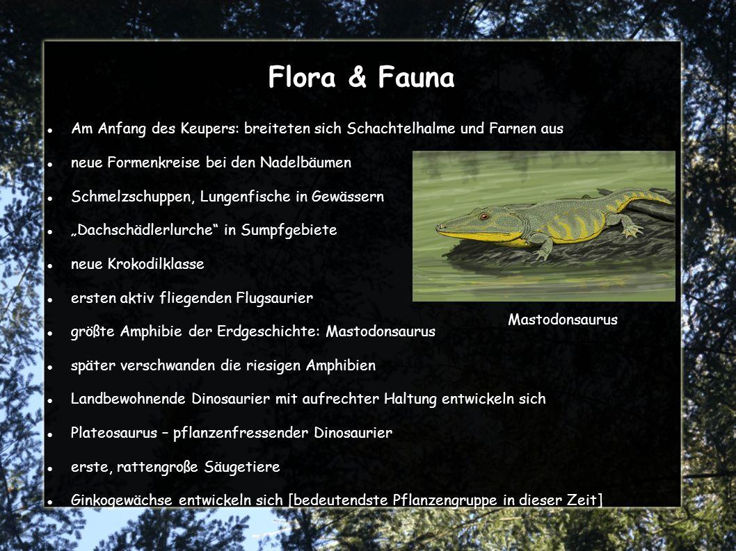 Flora & Fauna Am Anfang des Keupers: breiteten sich Schachtelhalme und Farnen aus. neue Formenkreise bei den Nadelbäumen.