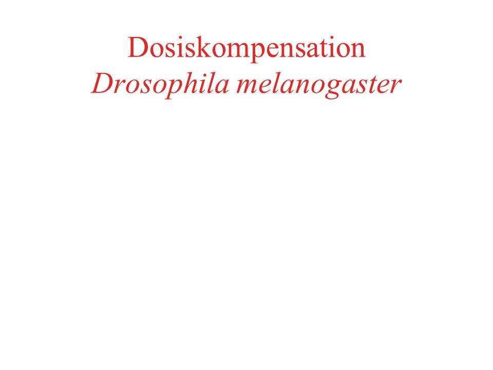 Dosiskompensation Drosophila melanogaster