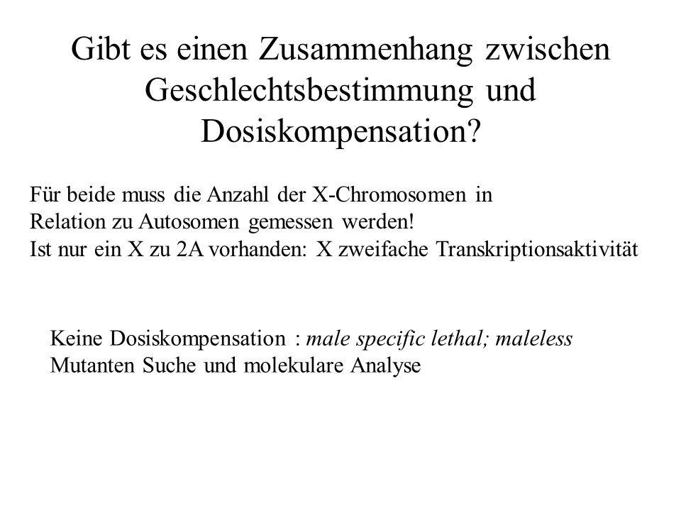 Gibt es einen Zusammenhang zwischen Geschlechtsbestimmung und Dosiskompensation