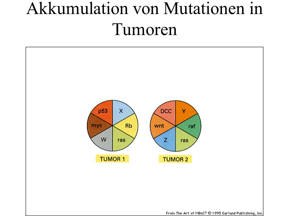 Akkumulation von Mutationen in Tumoren