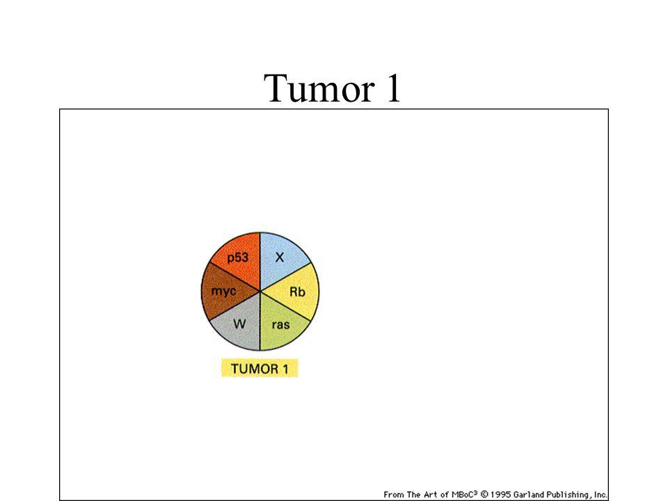 Tumor 1