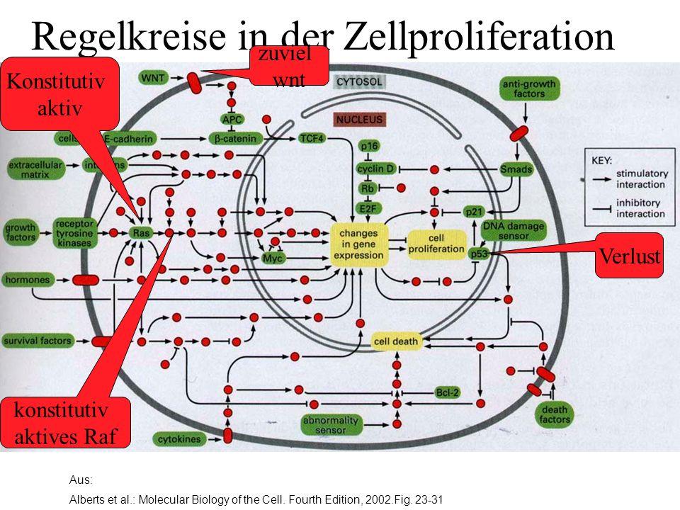 Regelkreise in der Zellproliferation