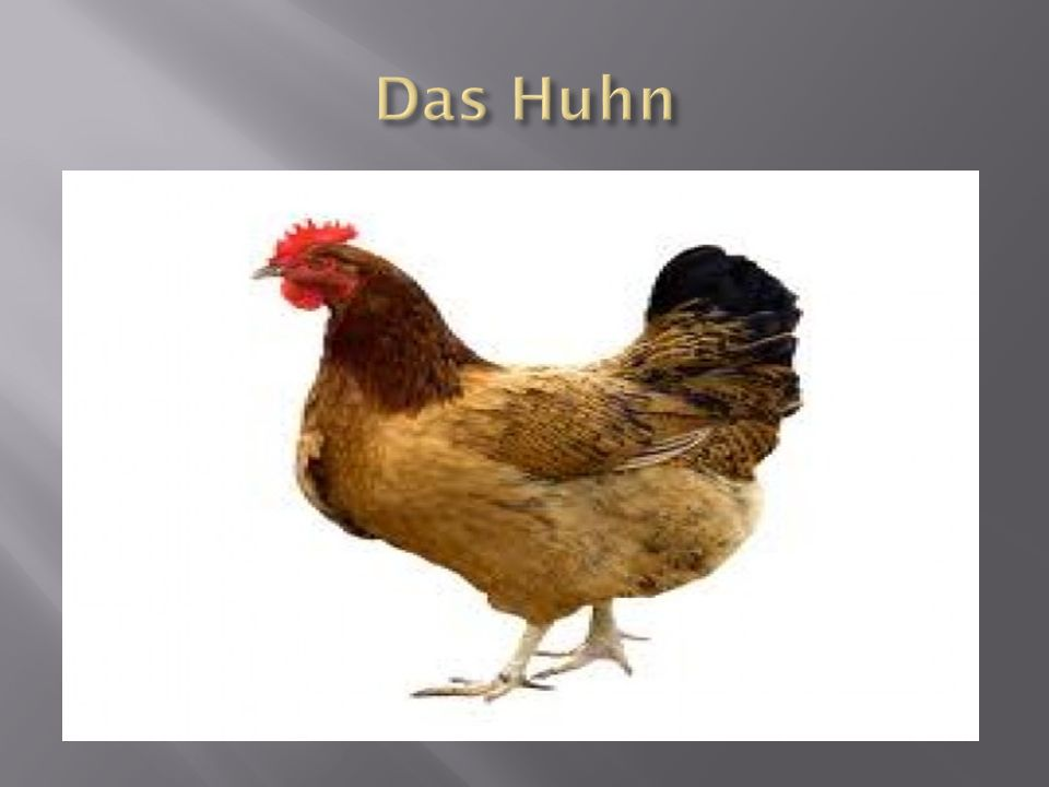 Das Huhn
