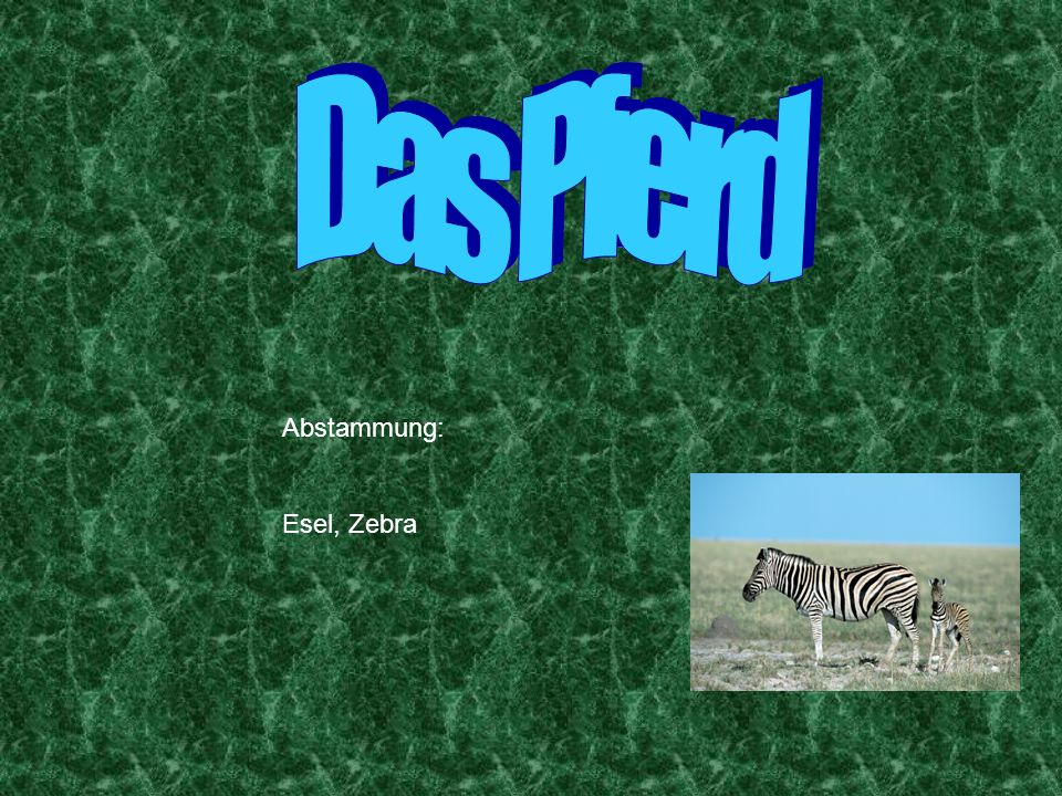 Das Pferd Abstammung: Esel, Zebra