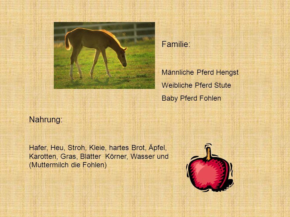 Familie: Nahrung: Männliche Pferd Hengst Weibliche Pferd Stute