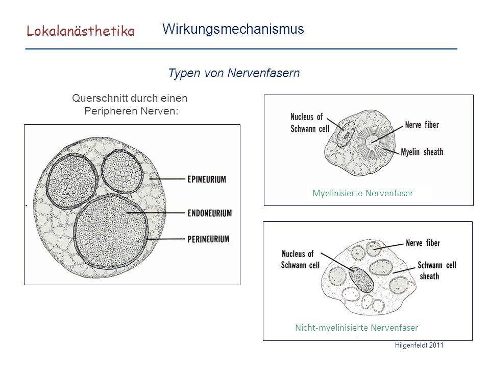 Lokalanästhetika Wirkungsmechanismus Typen von Nervenfasern