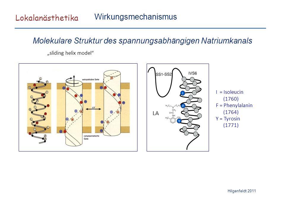 Molekulare Struktur des spannungsabhängigen Natriumkanals
