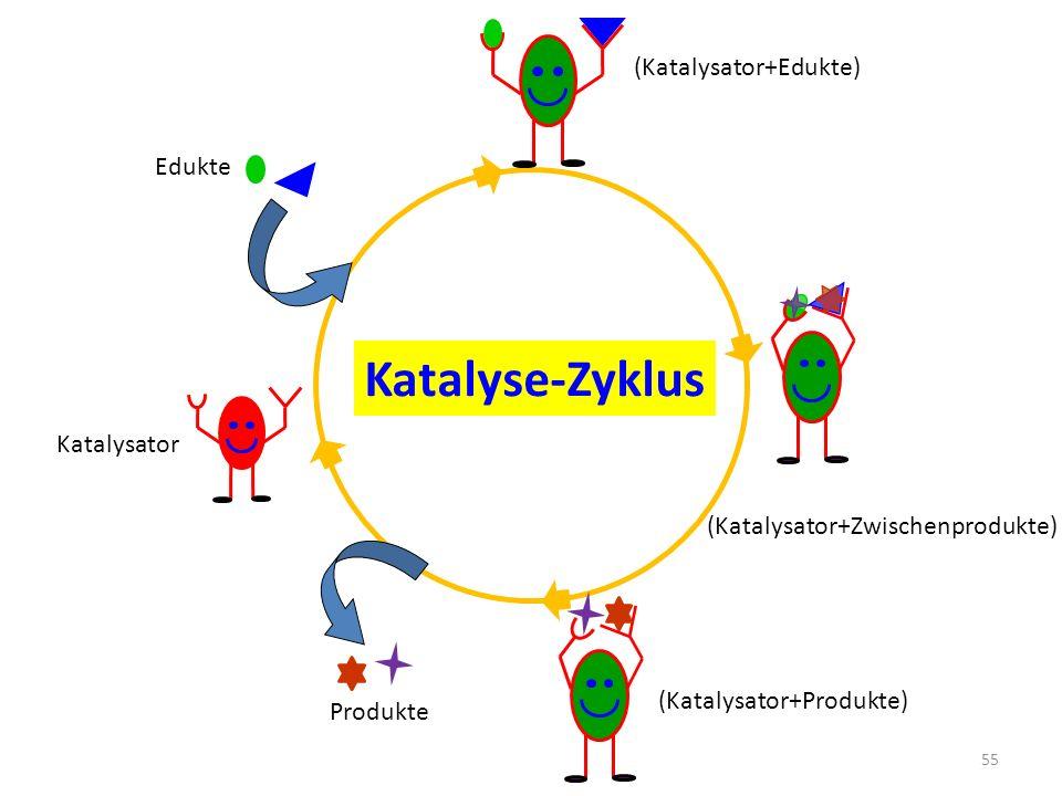 Katalyse-Zyklus (Katalysator+Edukte) Edukte Katalysator