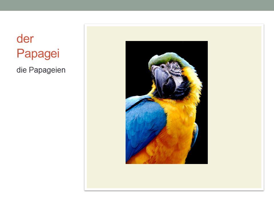 der Papagei die Papageien