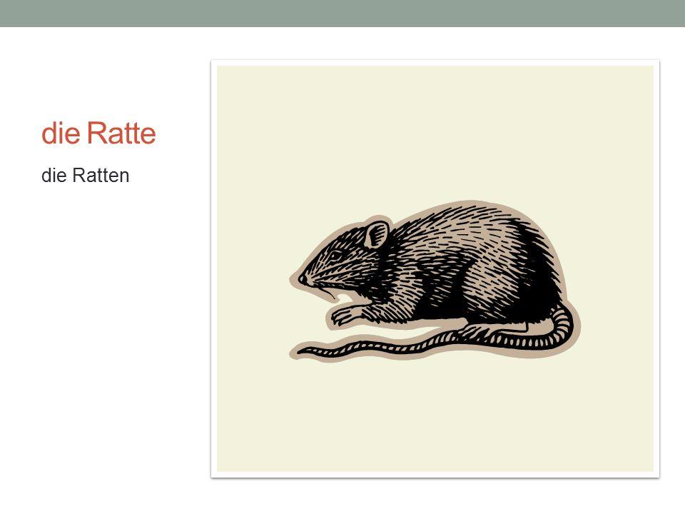 die Ratte die Ratten