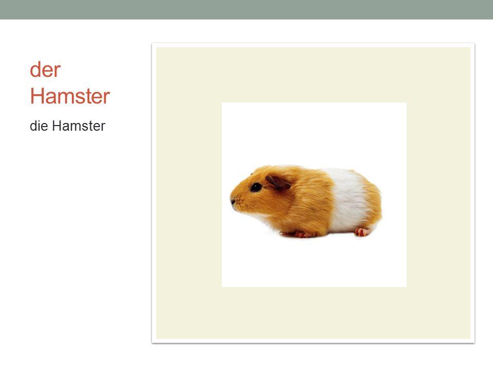 der Hamster die Hamster
