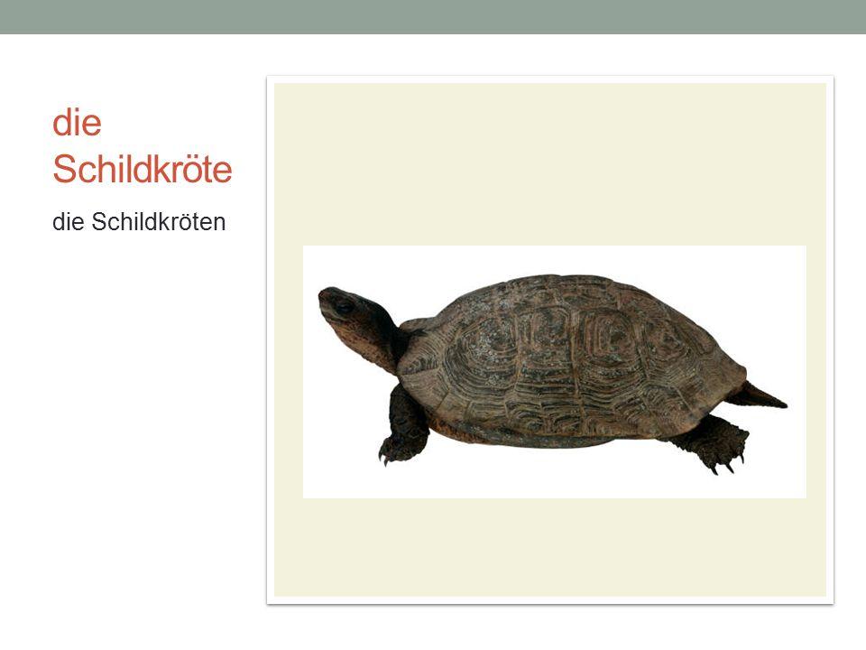 die Schildkröte die Schildkröten