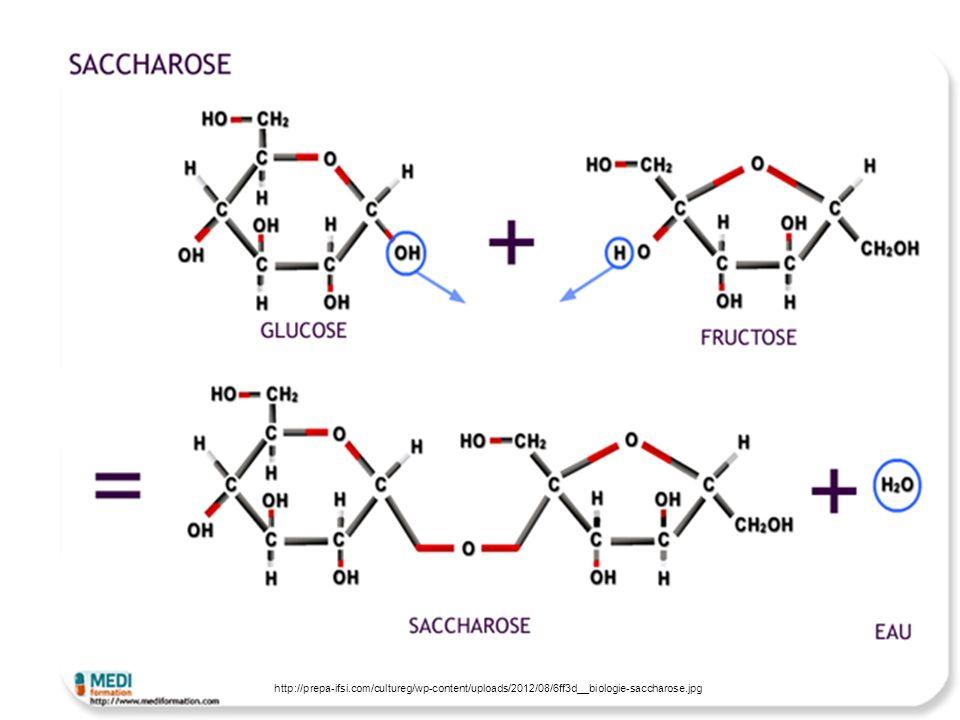 A 1gl,2fr Glykosidische Bindung abspaltung h2o, a-Glukose, b-Fructose