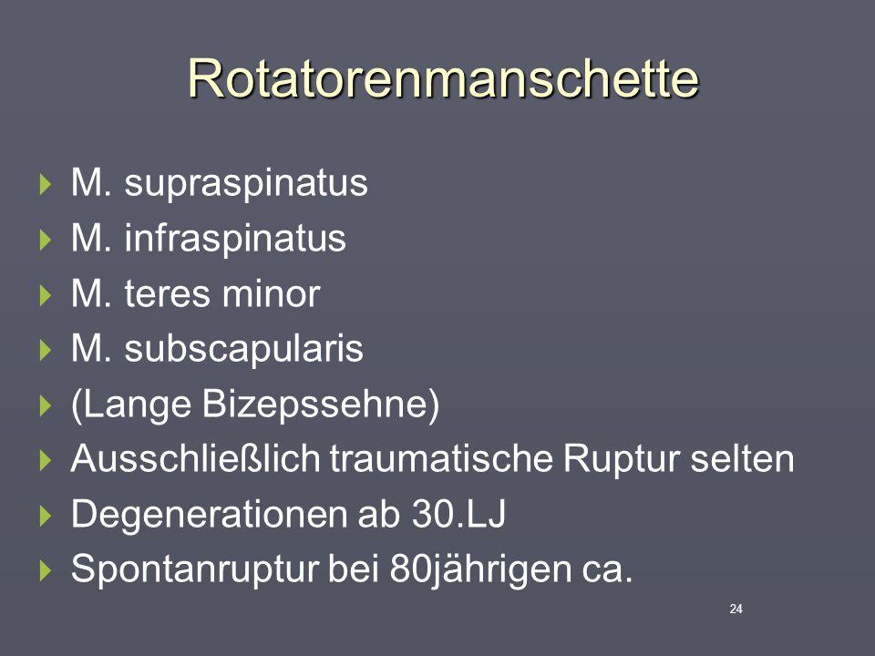 Rotatorenmanschette M. supraspinatus M. infraspinatus M. teres minor