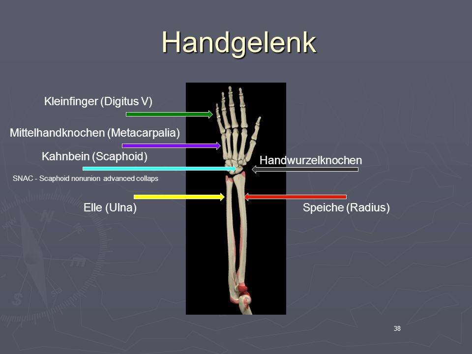 Handgelenk Kleinfinger (Digitus V) Mittelhandknochen (Metacarpalia)