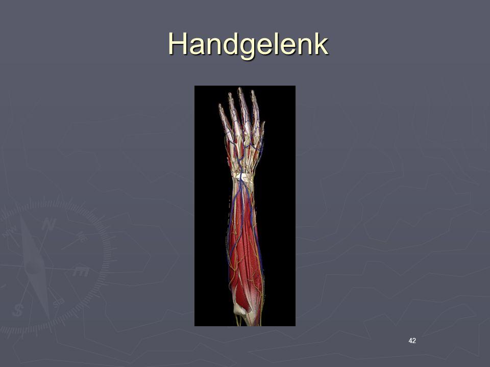 Handgelenk 42