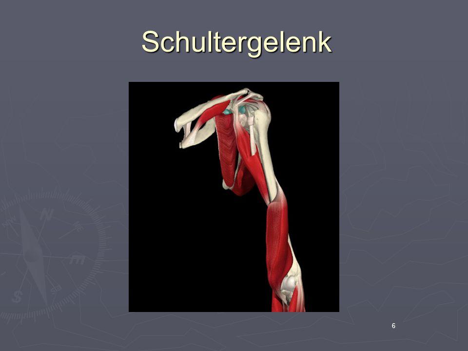 Schultergelenk 6