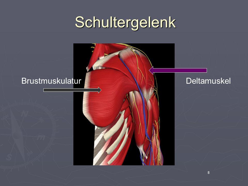 Schultergelenk Brustmuskulatur Deltamuskel 8