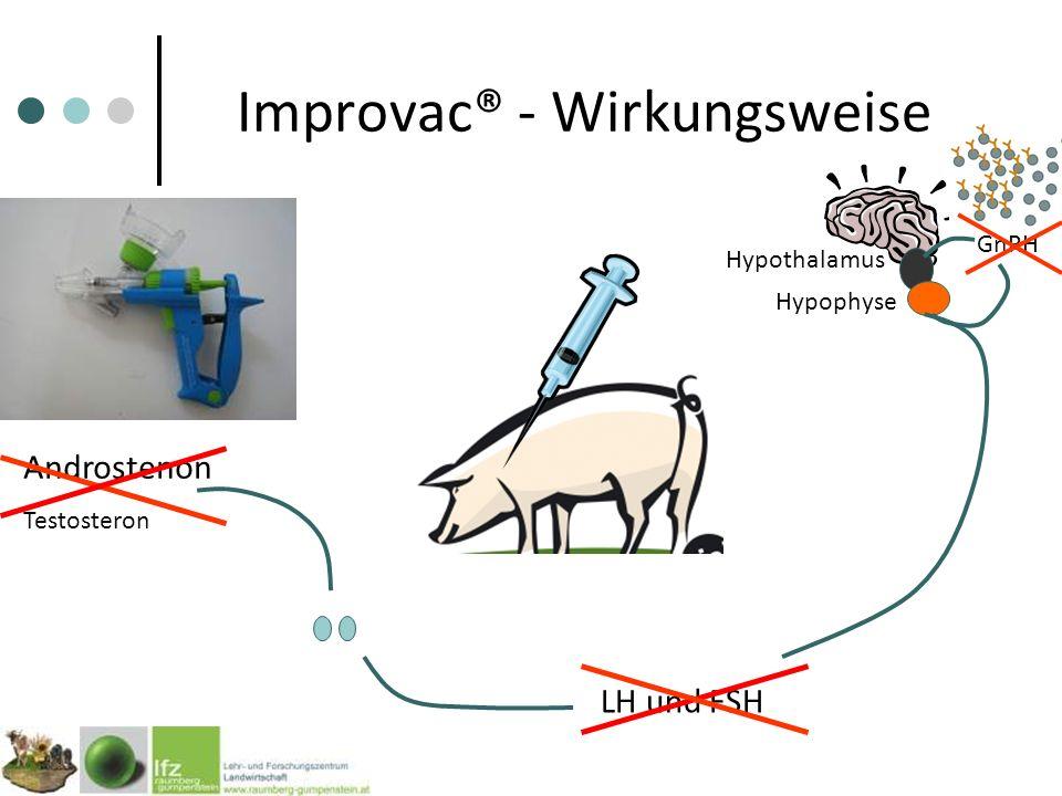 Improvac® - Wirkungsweise