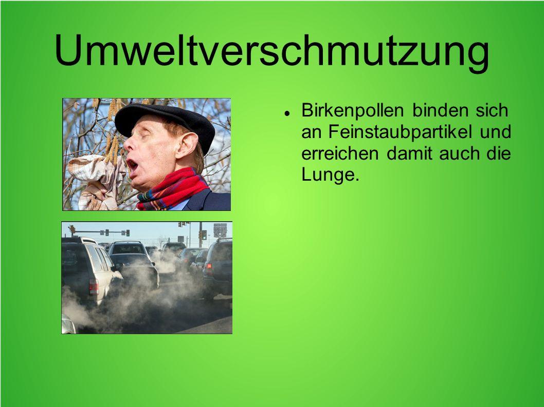 Umweltverschmutzung Birkenpollen binden sich an Feinstaubpartikel und erreichen damit auch die Lunge.