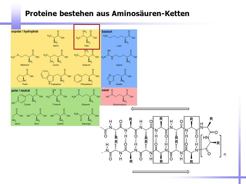 Proteine bestehen aus Aminosäuren-Ketten